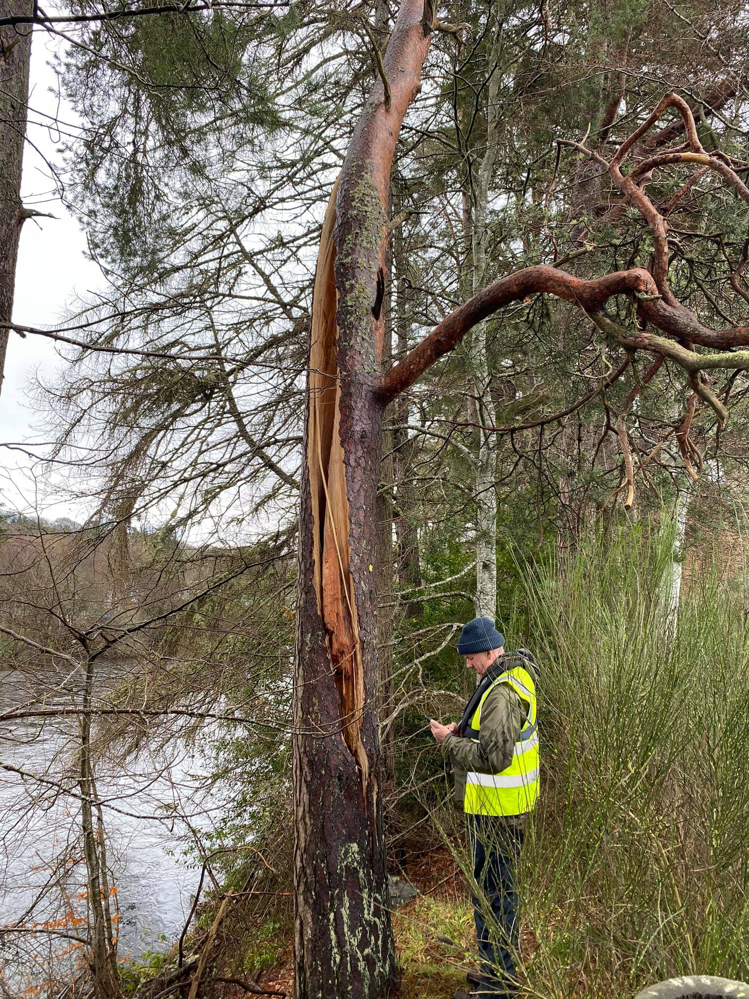 Andrew Jackman Carrying Out Tree survey